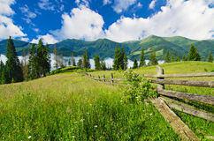 Carpathian mountain landscape with tree Stock Photography