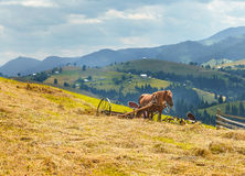Carpathian mountain Royalty Free Stock Images