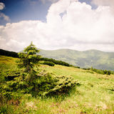 Carpathian mountains Royalty Free Stock Image