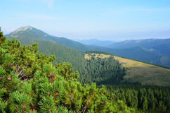 Carpathian Mountains from above. Royalty Free Stock Images