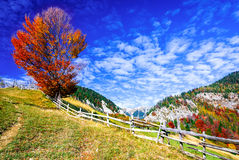 Carpathian Mountains, Autumn landscape in Magura stock photos