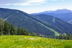 Carpathian mountains in Bukovel, Ukraine. Beautiful view on the Carpathian mountain slope with fir forests and meadow with blooming dandelions in Bukovel ski stock photography