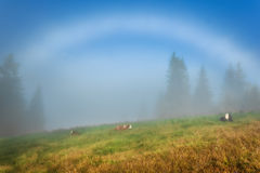 Carpathian Mountains. Cows lie on the slopes under a white rainbow. Stock Photography