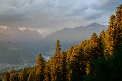 Carpathian mountains forest Stock Images