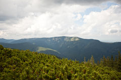 Carpathian mountains and forest. Royalty Free Stock Photography