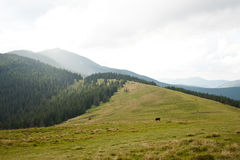 Carpathian mountains Royalty Free Stock Images