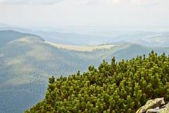 Carpathian mountains Royalty Free Stock Photos
