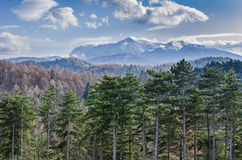 Carpathian Mountains landscape Royalty Free Stock Image
