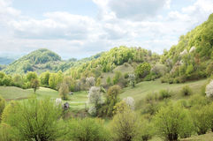 The Carpathian Mountains in May stock image