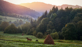 Carpathian Mountains. Morning in the mountains, the hourse runni. Ng on the field Stock Image