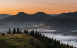 Carpathian Mountains. Mountain at sunrise, cows grazing on pasture fog. Royalty Free Stock Photo