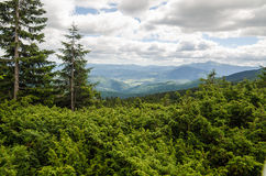 Carpathian Mountains next to Dragobrat, Ukraine Stock Photo