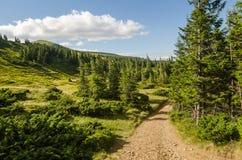 Carpathian Mountains next to Dragobrat, Ukraine. Summer Stock Photos
