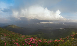 Carpathian Mountains. Panorama. Clouds in the sky, rhododendrons in bloom on the slopes Royalty Free Stock Photography