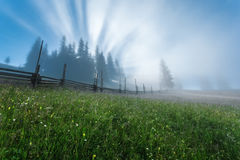 Carpathian Mountains. The rays of the rising sun streaming  through the trees. Royalty Free Stock Photography
