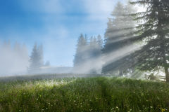 Carpathian Mountains. The rays of the rising sun streaming  through the trees. Stock Photography