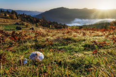 Carpathian Mountains. The rising sun lights up the mountain slopes, the fungus Stock Images