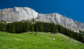Carpathian Mountains in Romania Royalty Free Stock Photo