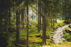 Small stream in forest, Carpathian Mountains royalty free stock images