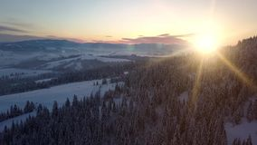 Aerial view of Carpathian mountains in winter at sunrise. Flight over mountains covered with spruce and pine forest. Carpathian mountains in the snow from a stock footage