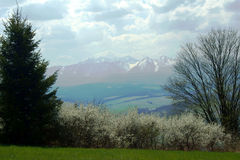 Carpathian mountains at spring Stock Images