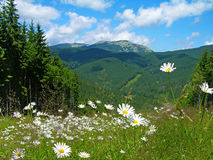 Carpathian mountains in summer, Ukraine Royalty Free Stock Photos