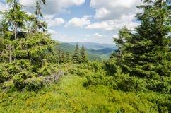 Carpathian Mountains in Ukraine Stock Photos