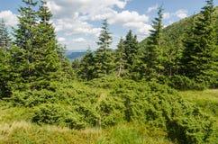 Carpathian Mountains in Ukraine Stock Images