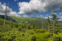 Carpathian Mountains in Ukraine Royalty Free Stock Photography