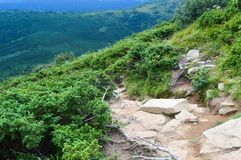 Carpathian mountains, Ukraine: Way to Hoverla, the highest Ukrainian mountain. In cloudy summer day stock photo