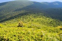 Carpathian mountains, Ukraine: Way to Hoverla, the highest Ukrainian mountain. In cloudy summer day stock photos