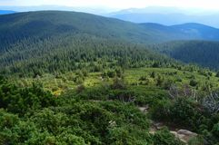 Carpathian mountains, Ukraine: Way to Hoverla, the highest Ukrainian mountain. In cloudy summer day stock images