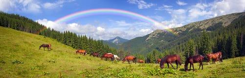 Carpathian mustangs in Gorgany Stock Photo