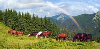 Carpathian mustangs in Gorgany Stock Images