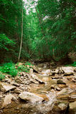 Carpathian river Royalty Free Stock Images