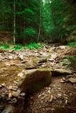 Carpathian river Royalty Free Stock Photography