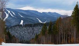 Carpathian skog nära skidasemesterorten Arkivfoton