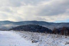 Carpathian skogar Royaltyfri Foto