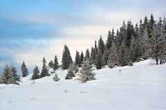 Carpathian snow scene Royalty Free Stock Image