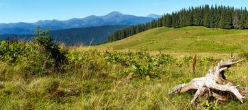 Carpathian sommarbergsikt, Ukraina royaltyfri foto