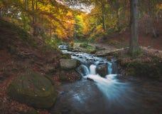 Carpathian stream Stock Image