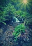 Carpathian stream_vintage Arkivfoton