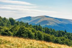 Carpathian sub alpine meadows in august. Beautiful mountain landscape. primeval beech forest on the edge of a hill. sunny weather with cloud formations on the stock image