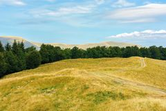 Carpathian sub alpine meadows in august. Beautiful mountain landscape. road winding in to the distance. primeval beech forest on the edge of a hill. sunny stock photo