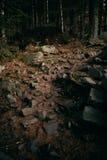 Carpathian touristic trail Stock Photography