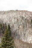 Carpathian Tree Forest In Winter Royalty Free Stock Photo