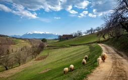 Carpathian village in the mountainof Transylvania, Romania royalty free stock photos