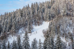 Carpathian winter landscape, Ukraine Royalty Free Stock Photos