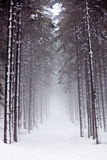 Carpathian winter mountains Stock Images