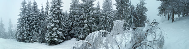 carpathian zimy gór, fotografia stock